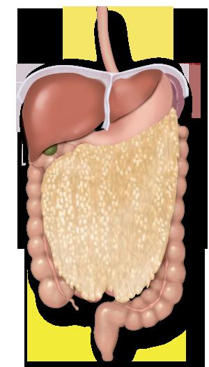 Una visión general de la digestión y los elementos constitutivos del cuerpo humano