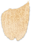 Illustration of the omentum overlying the intestinal system